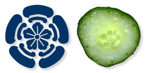 祇園木瓜とキュウリ